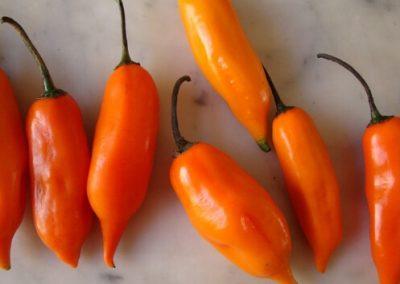 Aji Amarillo peruvian chili 2