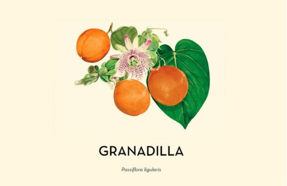 Granadilla Passiflora ligularis 2