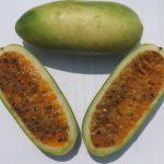 caracteristicas tumbo curuba 6 (1) (1)