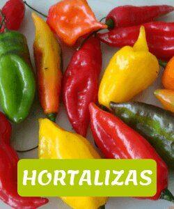 hortalizas andinas