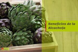 beneficios alcachofa propiedades