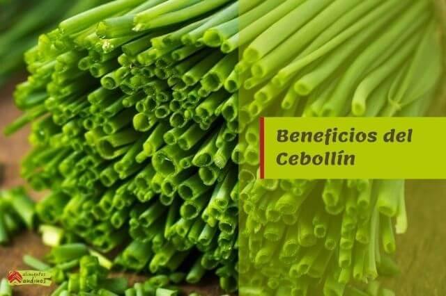 Propiedades y Beneficios del Cebollín