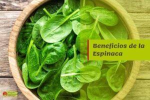 beneficios espinaca propiedades