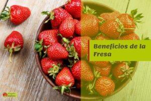 beneficios fresa propiedades