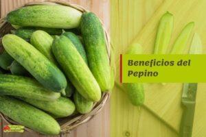 beneficios pepino propiedades