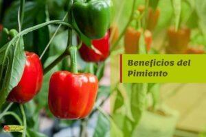 beneficios pimiento propiedades