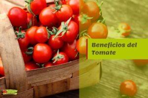 beneficios tomate propiedades