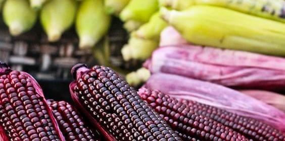 maíz-morado_img