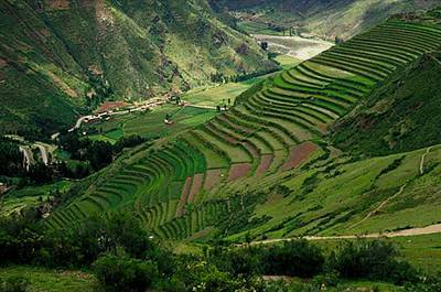 cultivo alimentos andinos