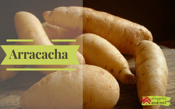 Photo of Arracacha