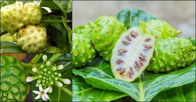 noni devil fruit 4