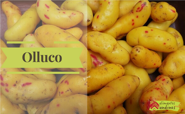 Photo of Olluco o Melloco