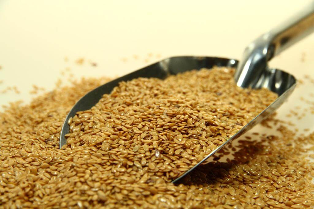 Linaza o lino / linseed flax or seeds