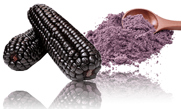 Maiz morado purple corn